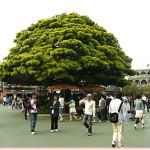 この木なんの木、隠れミッ木(笑)