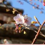 春来たかな~♪